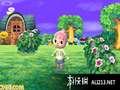 《来吧!动物之森》3DS截图-24