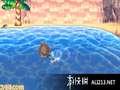 《来吧!动物之森》3DS截图-20