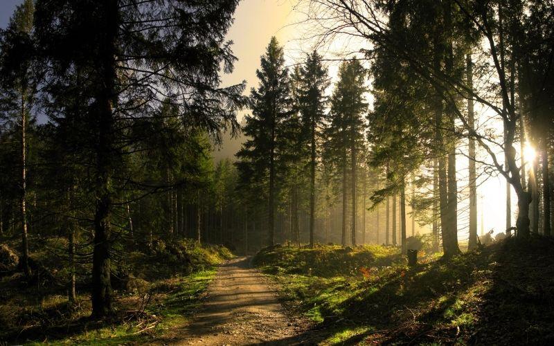 穿过树林的唯美阳光图片