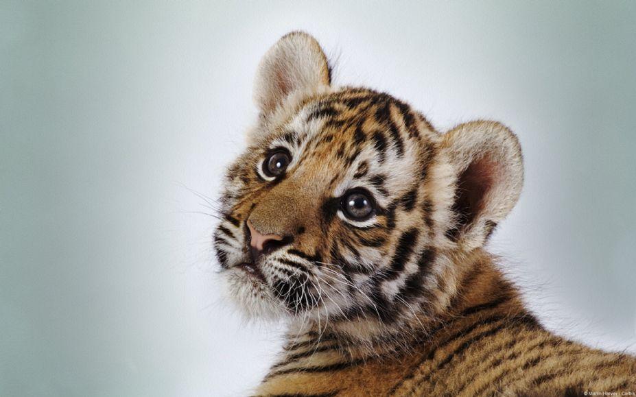 可爱动物特写桌面高清壁纸