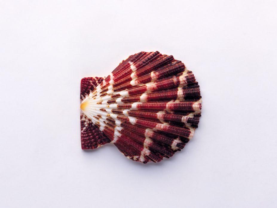 海洋生物世界 精美贝壳海螺写真壁纸图片