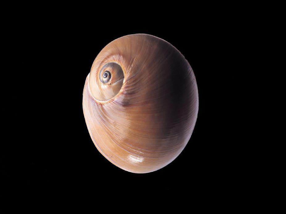 海洋生物世界 精美贝壳海螺写真壁纸图片(二)