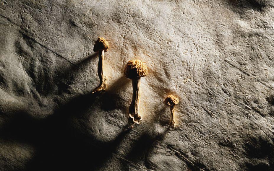 唯美桌面时光记忆 宽屏千年生物桌面壁纸图片 39 游侠图库