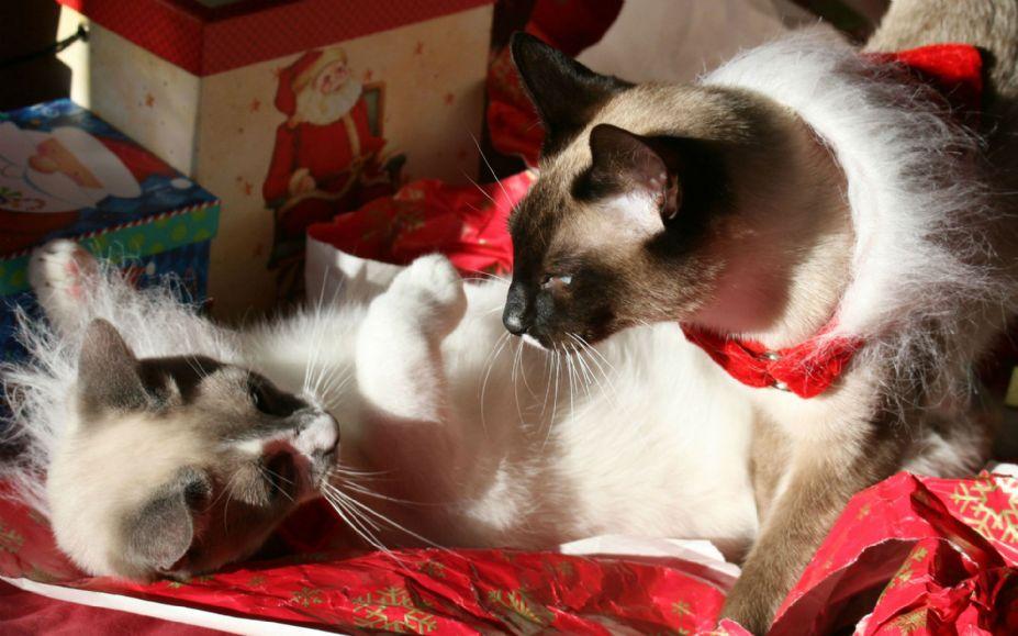 可爱猫咪的圣诞节桌面高清宽屏壁纸