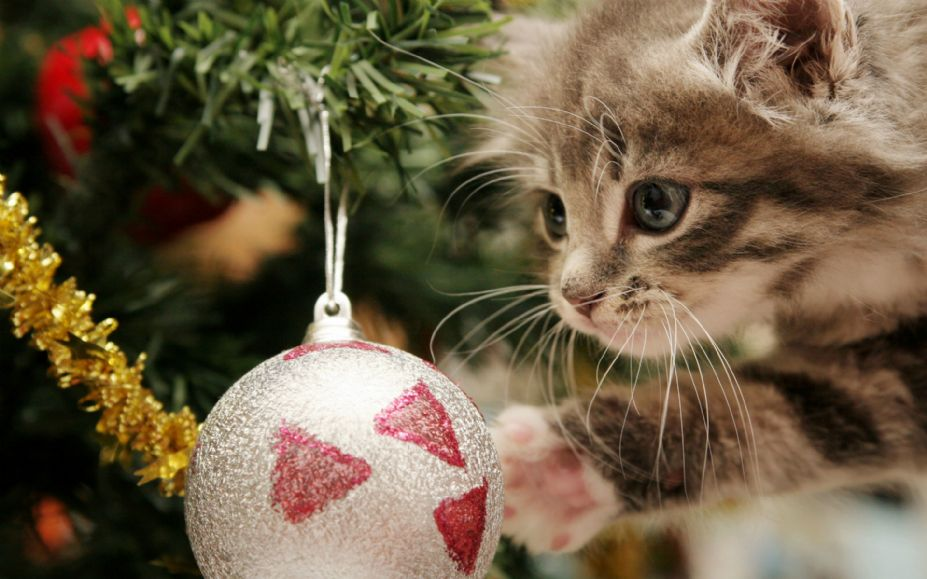 可爱猫咪的圣诞节桌面高清宽屏壁纸图片(13)