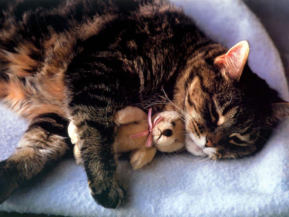 超萌小猫咪可爱写真桌面高清壁纸(7)