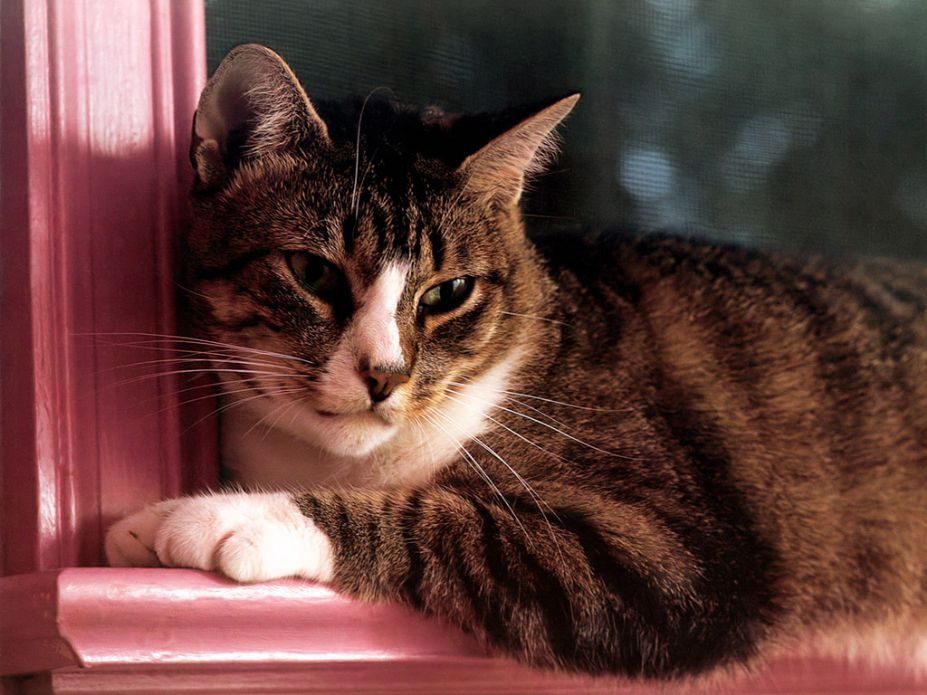 超萌小猫咪可爱写真桌面高清壁纸(8)