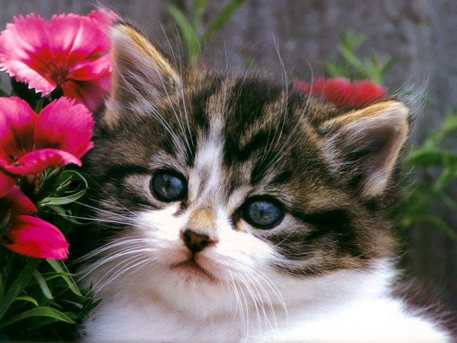 壁纸 动物 猫 猫咪 小猫 桌面 927_695