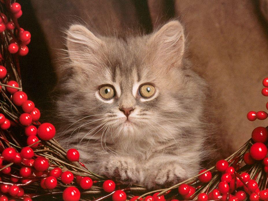 超萌小猫咪可爱写真桌面高清壁纸