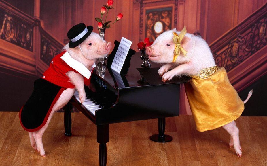 可爱超萌小猪高清写真桌面壁纸
