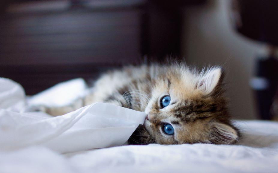 超萌可爱小猫图片桌面高清壁纸