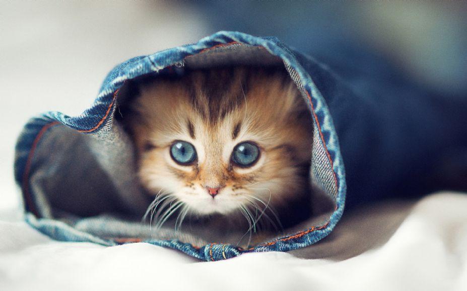 壁纸 动物 猫 猫咪 小猫 桌面 927_579