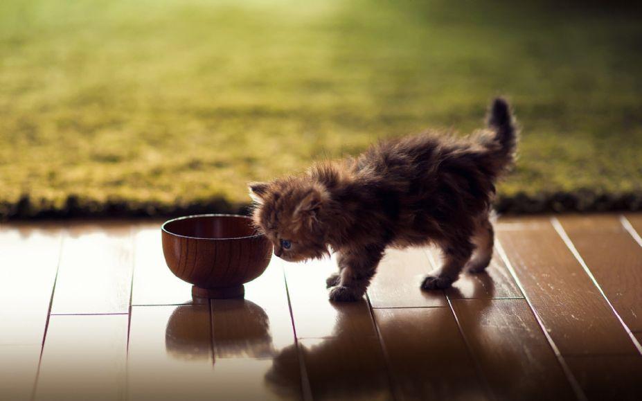 超萌可爱小猫图片桌面高清壁纸 (3)