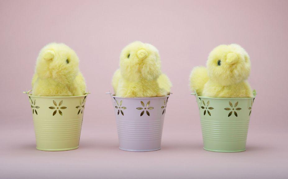 彩鸡彩蛋好可爱 彩色兔子来相伴
