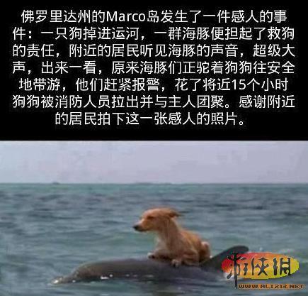 人兽性爱����y�nX�_囧图我和小伙伴们都惊呆了