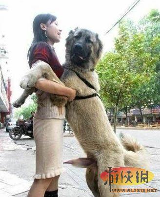 救人女子被狗咬的四肢