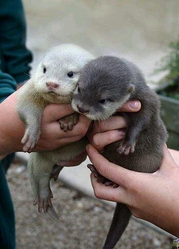 萌你一脸刚出生的小动物