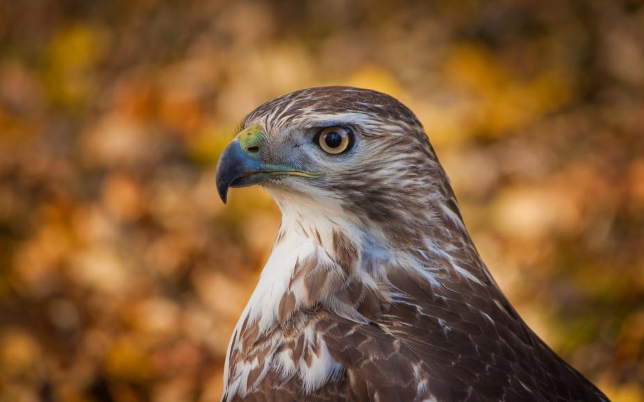 动物图片8张  最霸气雄鹰图片集-最清晰雄鹰图片_雄鹰展翅霸气高清