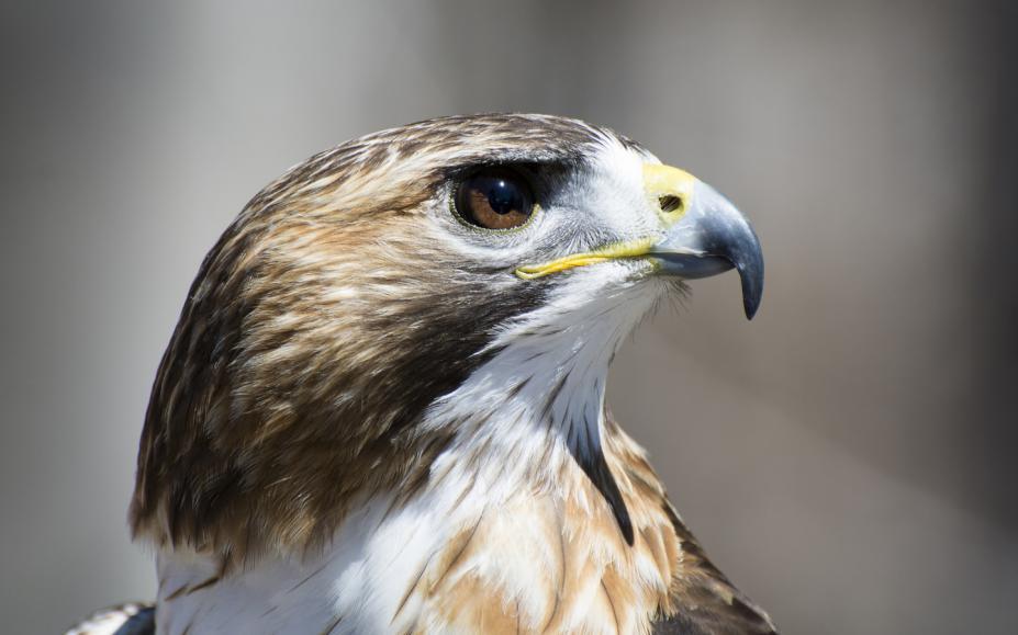 现时最大体型的飞行动物是什么