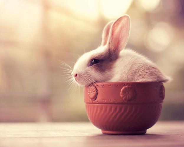 萌宠治愈系小兔子摄影图集