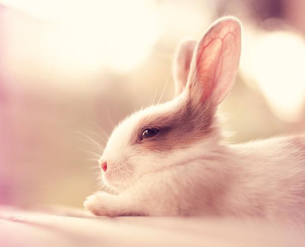萌宠治愈系小兔子摄影图集 我只想静静的