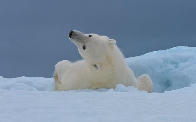 极地动物摄影图欣赏