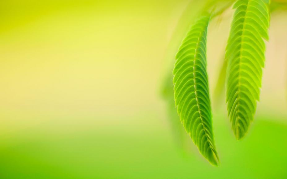 背景 壁纸 绿色 绿叶 树叶 植物 桌面 927_579