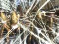 《地球防卫军4.1:绝望阴影再袭》游戏截图-2