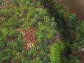 《Ymir》游戏截图-6