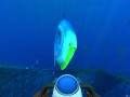 《深海迷航:零度之下》游戏壁纸-5