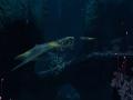 《深海迷航:零度之下》游戏壁纸-7