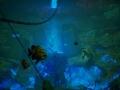 《食人鲨》游戏截图-2-3小图