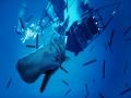 《食人鲨》游戏截图-3-4小图