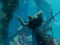 《食人鲨》游戏截图-3-5小图