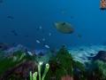 《Ecosystem》游戏截图-1小图