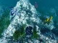 《Ecosystem》游戏截图-6小图