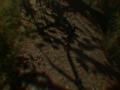 《山鬼》游戏截图-4小图