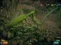 《虫豸天下》游戏截图-5小图
