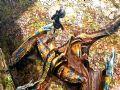 《怪物猎人4》游戏壁纸【第七辑】