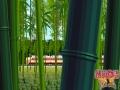 《铁道物语:陆王》游戏截图-2小图