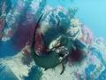 《食人鲨》游戏壁纸-4