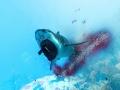 《食人鯊》游戲壁紙-6