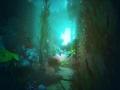 《海之呼唤》游戏截图-3