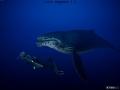 《深海超越》游戏壁纸-7