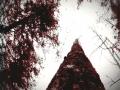 《狼人之末日怒吼:地灵之血》游戏截图-1小图