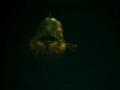 《捕获物:鲤鱼和大鱼》游戏截图-1