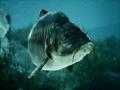 《捕获物:鲤鱼和大鱼》游戏截图-3