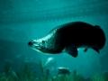 《捕获物:鲤鱼和大鱼》游戏截图-6