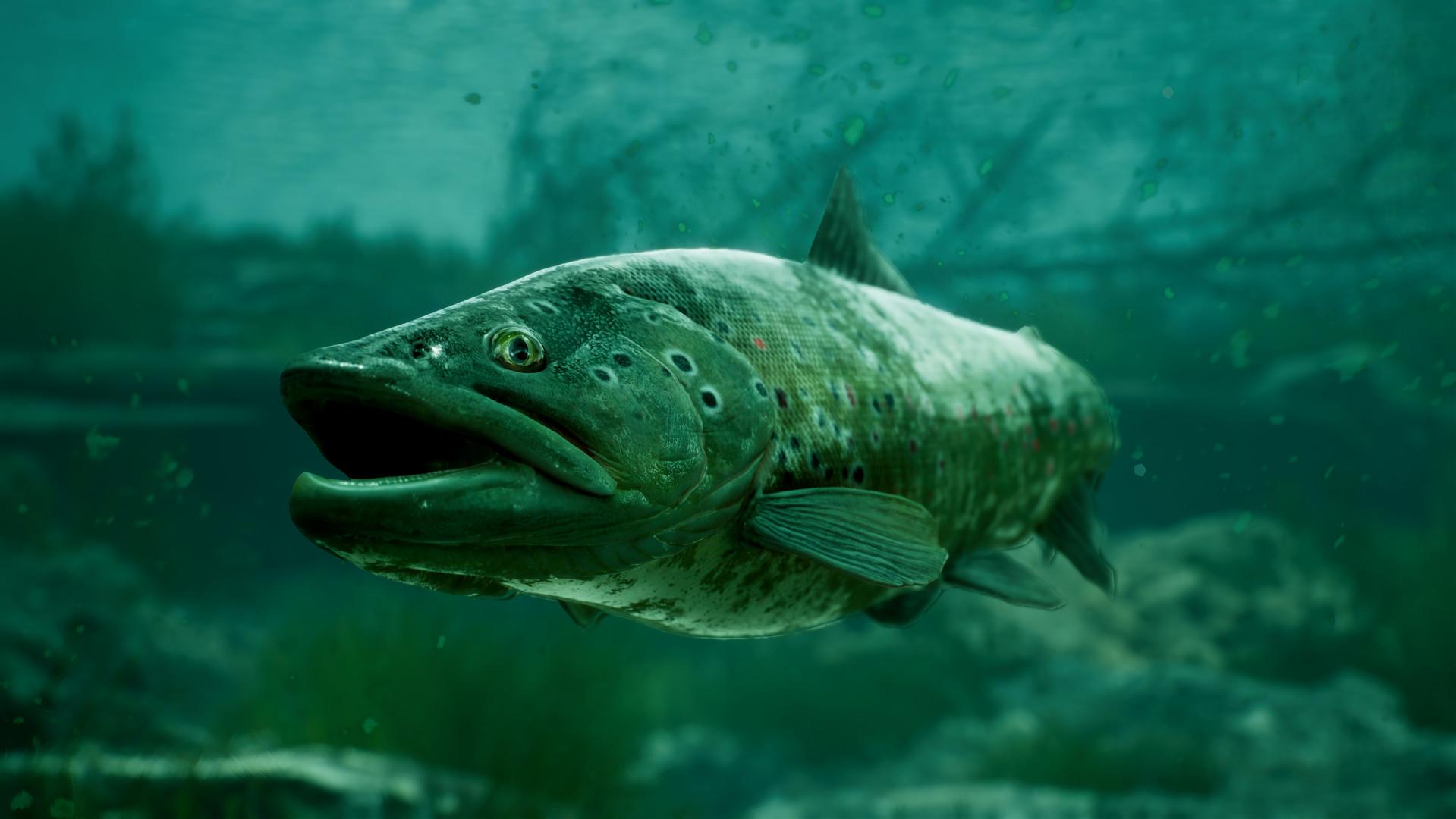 捕获物:鲤鱼和大鱼/单机.网络联机