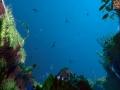 《Ecosystem》游戏截图-7小图